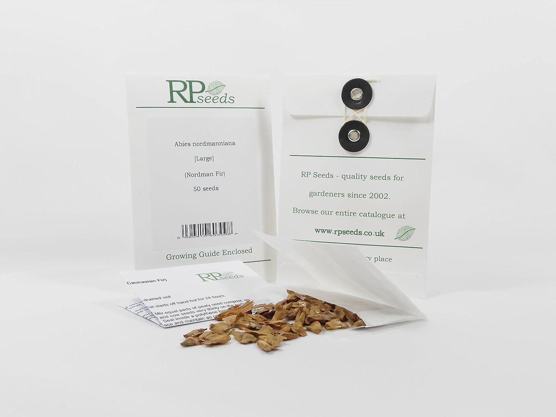 RP Seeds Pinus Parviflora Japanese White Pine Seeds Amazoncouk
