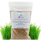 Organic Wheat Grass Seeds, Cat Grass Seeds, 16 Ounces- 100% Organic Non GMO - Hard Red Wheat. Harvested in The US. Easy to Gr