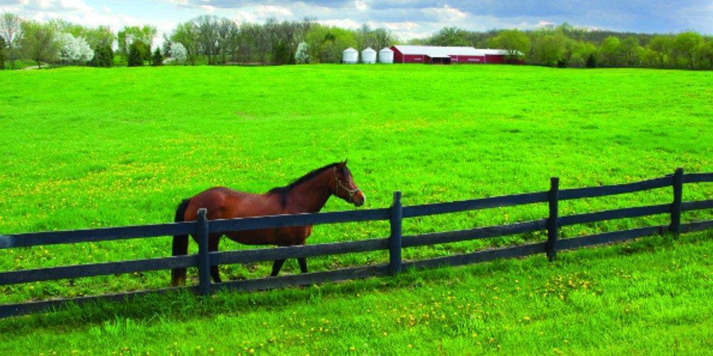 Nature's Seed PB-SAH-2-A 2 Acre South-Atlantic Transitional Horse Pasture Blend