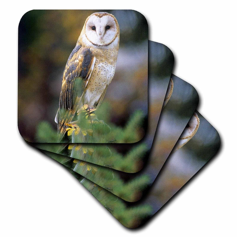 NA02 JAL0000 Soft Coasters 3dRose cst/_84070/_1 Barn owl on a fence post Set of 4 John Alves
