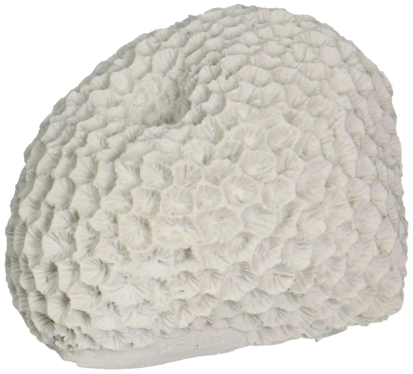 Deep bluee Professional ADB80031 Brain Coral for Aquarium, 3 by 2.5 by 2-Inch