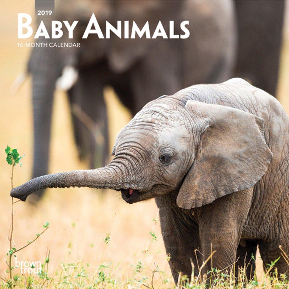 Baby Animals 2019 7 x 7 Inch Monthly Mini Wall Calendar, Animals Domestic (Multilingual Edition) PDF