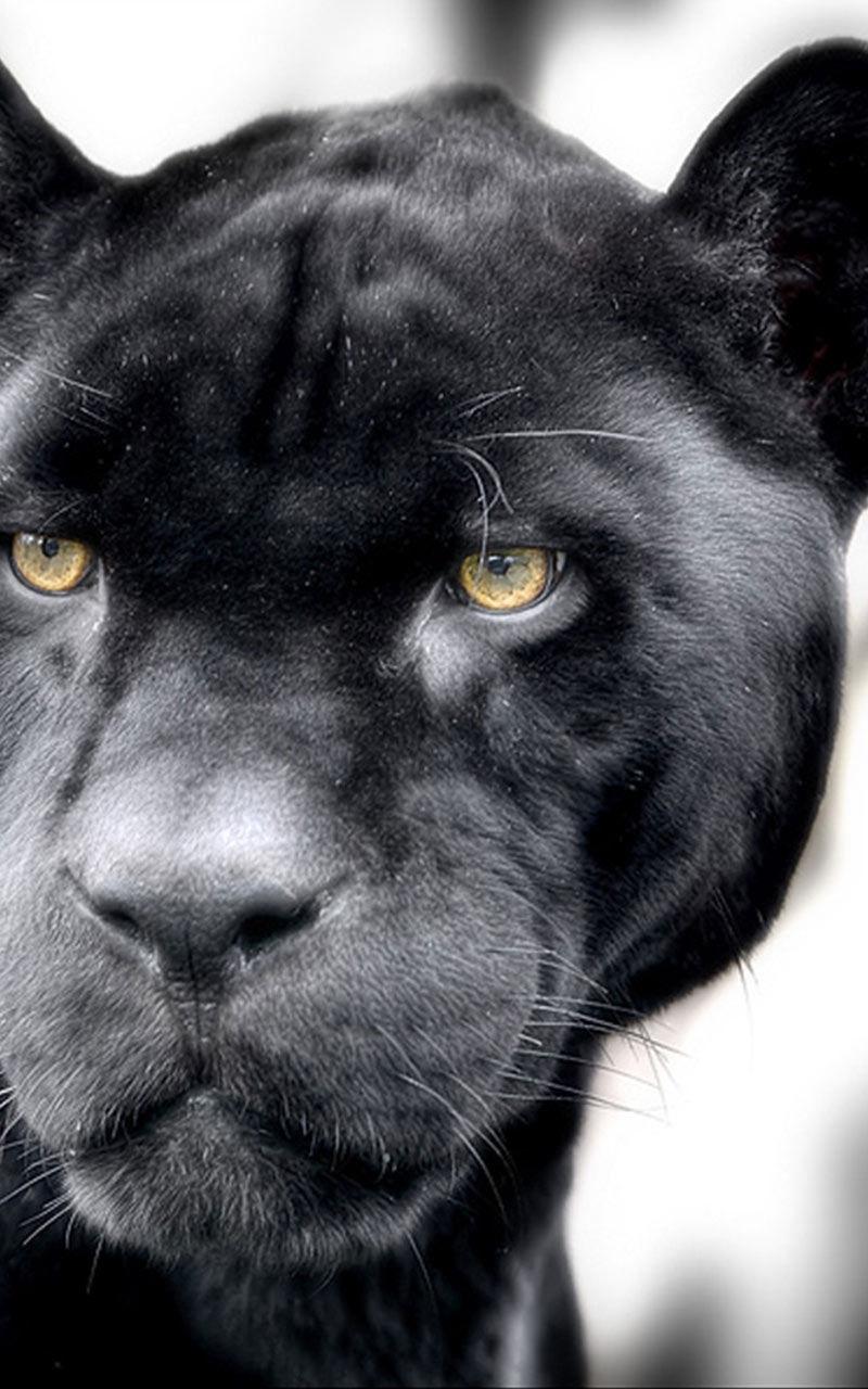 Amazon Com Black Panther Live Wallpaper Apps Games