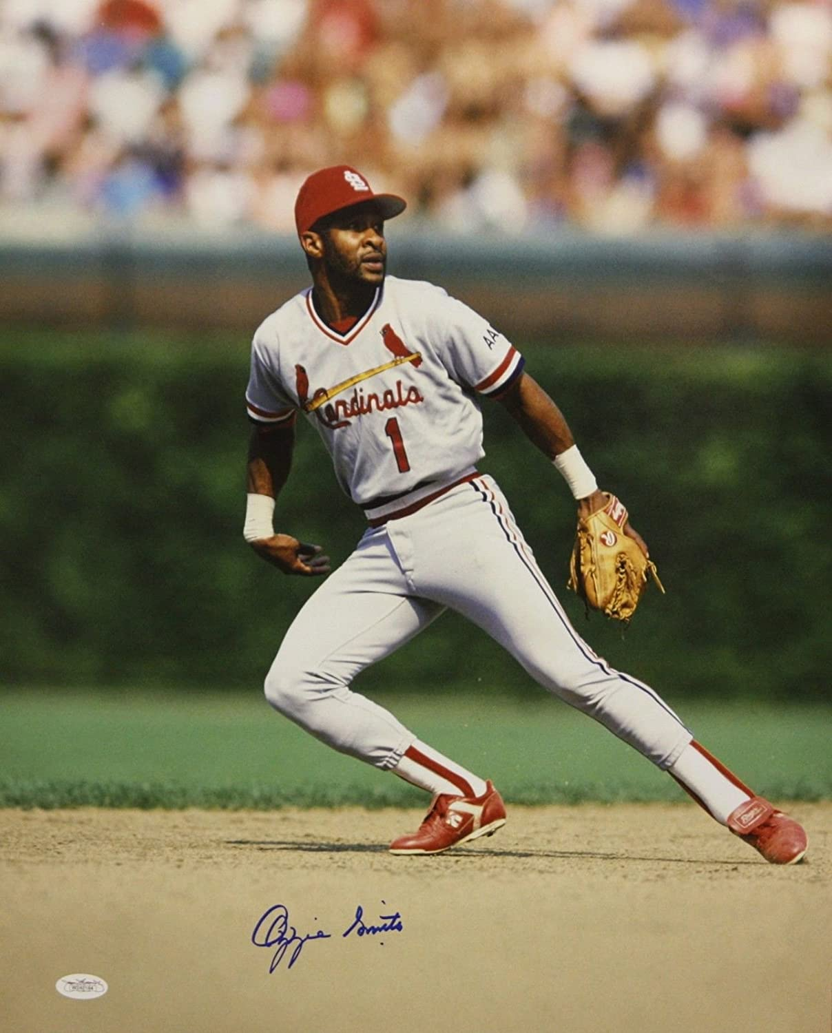 JSA Authenticated Ozzie Smith Autographed 16x20 On Field Photo