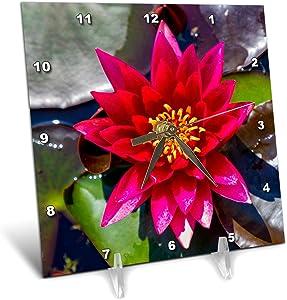 3dRose Croatia, Zagreb. Water Lily Plant in Botanical Gardens. - Desk Clocks (dc_330500_1)