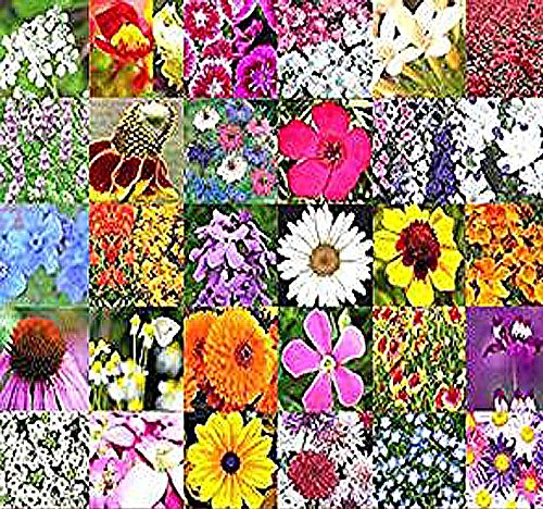BIG PACK - PARTIAL SHADE MIX - Flower Seeds By MySeeds.Co (Big Pack - Partial Shade Mix) (Best Flowers For Partial Shade)