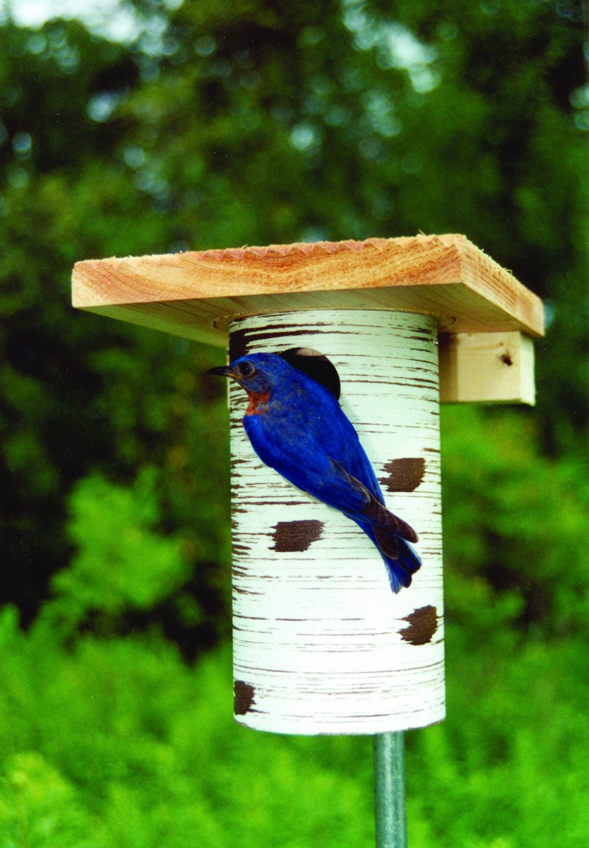 Amazon.com : Bluebird house - Gilbertson PVC & cedar bird house ...