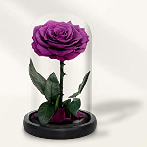 Preserved Roses in Glass Dome, Long Lasting Purple Roses Real, Glass Flower Rose for Valentine's Day, Christmas, Mother's Day, Birthday, Anniversary, Wedding, Thanksgiving