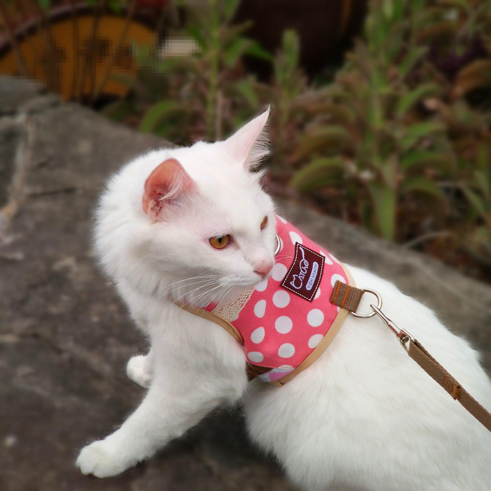 Yizhi Miaow Adjustbale Kitten/Ferret Walking Jackets Padded Vest Cat Harness and Leash X-Small, Cat/Dog Harness and Leash for Walking Escape Proof