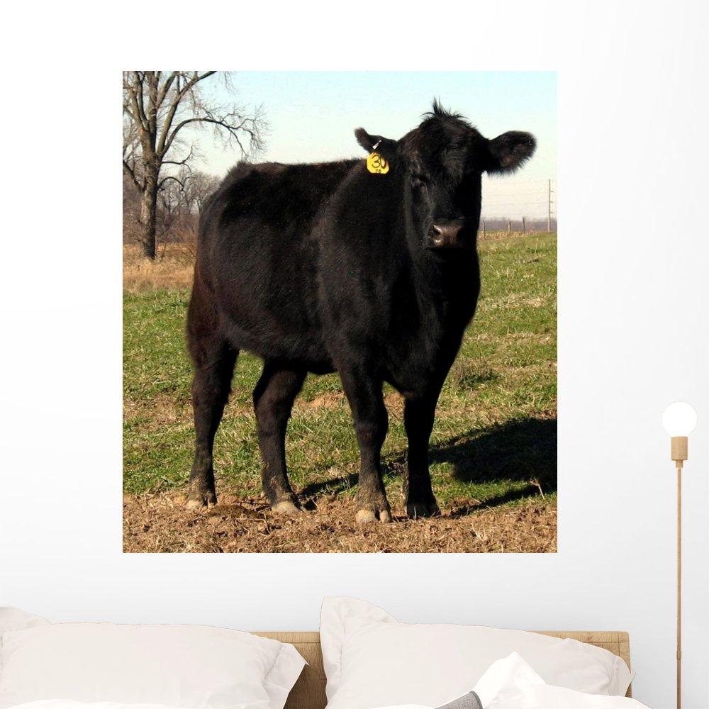 Amazon.com: Negro Angus vaca ganado Mural por Wallmonkeys ...
