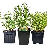 Stargazer Perennials Organic Chefs Herb Plant Collection Thyme, Oregano, Rosemary 3 Live Plants Herb Kits Organic Grown Herbs All Non-GMO Fresh Herbs