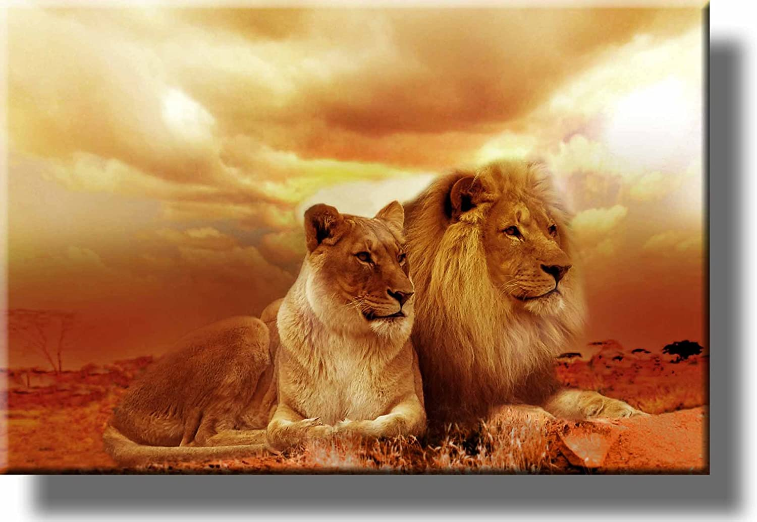 African Lion and Lioness Picture on Stretched Canvas Wall Art Décor Framed Ready to Hang!