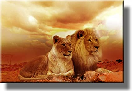 African lion and lioness picture on stretched canvas wall art décor framed ready to hang
