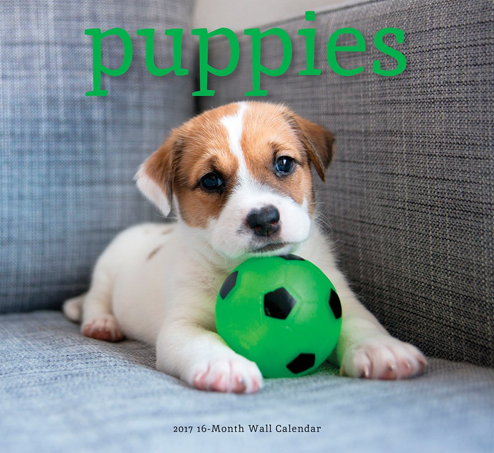 2017 Monthly Wall Calendar - Puppies
