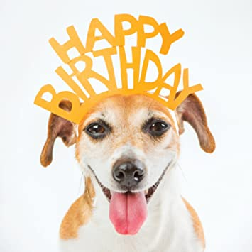 Dog happy birthday crown greetings card amazon pet supplies dog happy birthday crown greetings card bookmarktalkfo Choice Image