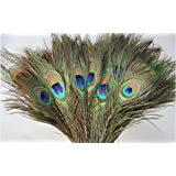 Desi Natural Peacock Eye Feathers Tails, Pack of 25