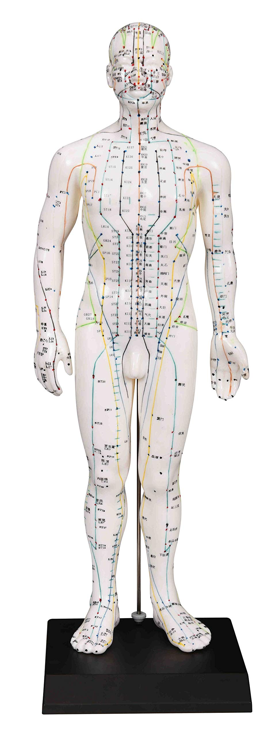 Male Acupuncture Model 20'' with Chinese and English Points by Acupuncture Model/Chart/ Book
