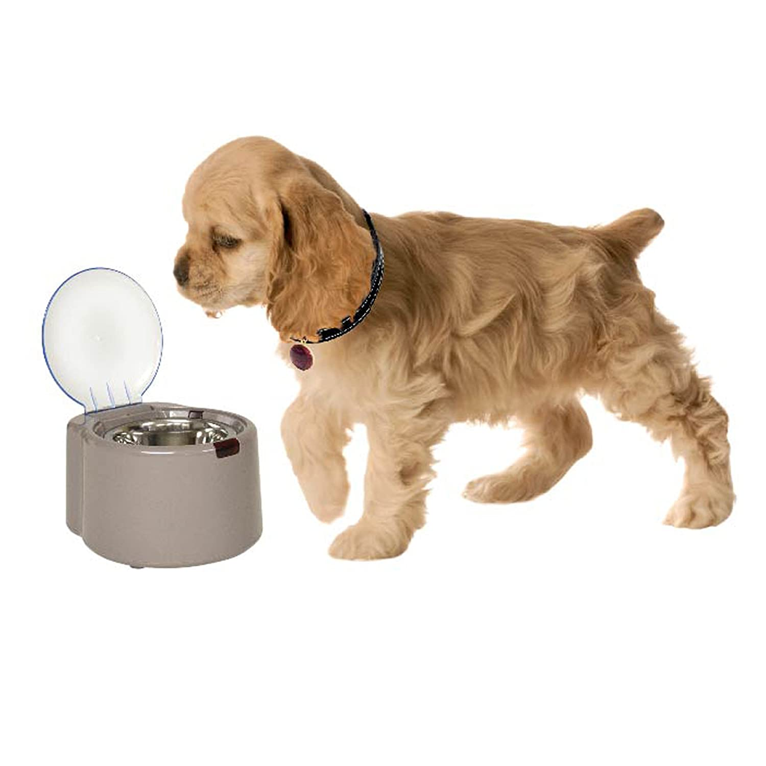 for ca by petwant cats automatic food feeder dispenser amazon timer controlled dp smart pet dry wifi dogs supplies phones dog and