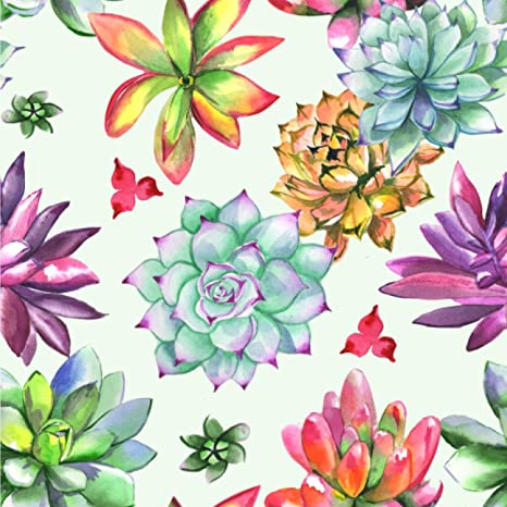 Amazon Com Youcustomizeit Succulents Wallpaper Surface