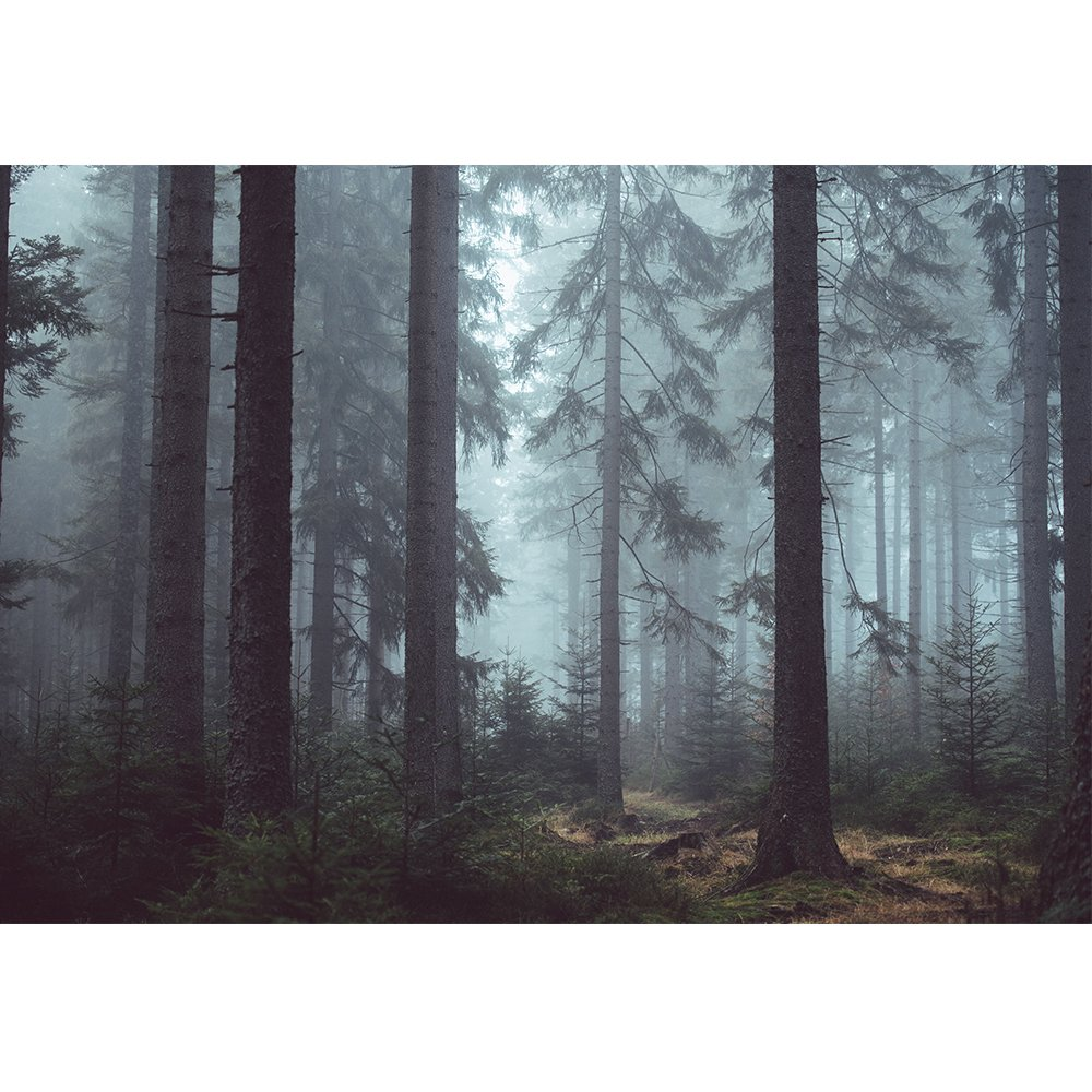 wall26 Foggy Pin Forest - Removable Wall Mural | Self-Adhesive Large Wallpaper - 66x96 inches by wall26 (Image #2)