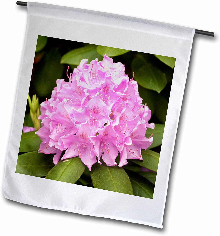 3dRose Danita Delimont - Flowers - Rosebay Rhododendron Flowers, Great Smoky Mountains TN - US43 AJE0269 - Adam Jones - 18 x 27 inch Garden Flag (fl_94328_2)