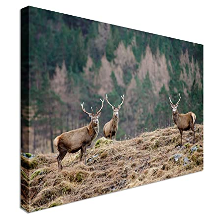 scottish stag pack scotland canvas art cheap wall print home