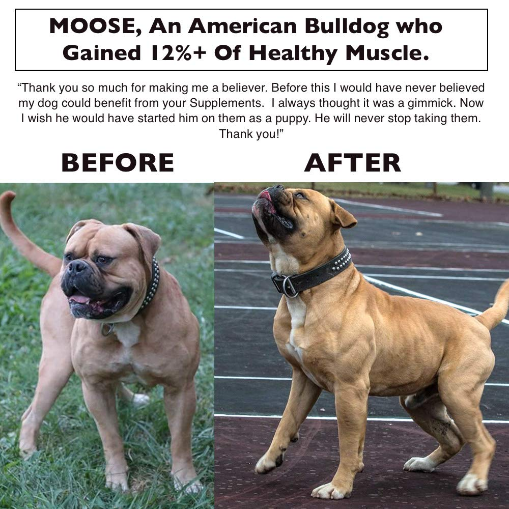 Muscle Bully Protein Supplement for Dogs - Supports Muscle Growth, Recovery  and Size  Formulated for Bull Breeds (Pit Bulls, American Bullies,