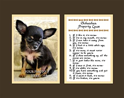 Chihuahua Property Laws Wall Decor Pet Dog Saying Gift