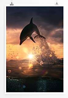 Islandburner Bild Bilder Auf Leinwand Marine Leben Hintergrund