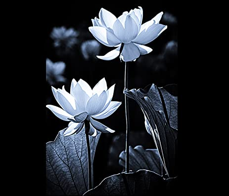 Japanese zen garden lotus flower photo black and white photography wall decor