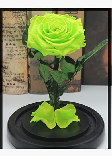 The Beauty And Beast Rose