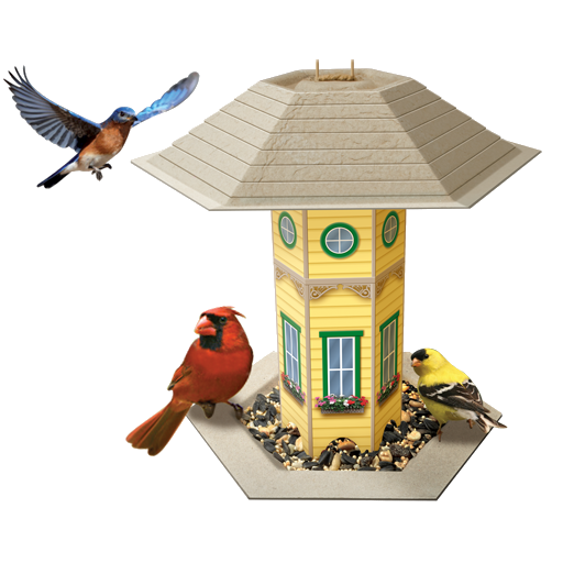 Bird Feeder Logger N  America