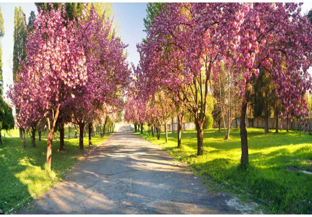 Vinyl 10x6.5ft Pink Blossom Tree Rural Road Backdrop Spring Backgrouds Romantic Wedding Photography Portraits Travel Theme Photo Backdrop Children Adult Shooting Studio Props