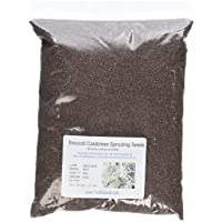 Organic Seeds: Broccoli Sprouting Seeds- Todd's Seeds Brand - 2.5 Lbs of Broccoli Seeds by Farmerly