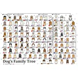 1000ピース ジグソーパズル 犬の系統図 (49x72cm)