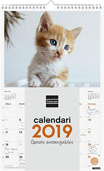 Finocam 780562919 - Calendario de pared 2019: Amazon.es: Oficina y papelería