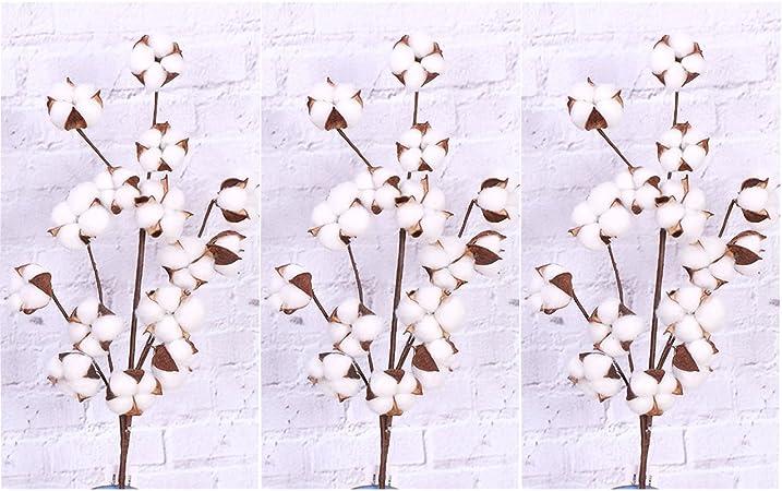 rdgg algodón tallos ramas (3 tallos/Unidades) con Real Natural color blanco algodón flores bolls Farmhouse estilo flores pantalla de relleno – flores secas para decoración de casa oficina o boda: Amazon.es: Hogar