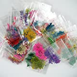 A_Grade Real Flower Dried Flower Assorted Styles Nail Art Dry Flower Spiraea Ammi majus Pressed Flower