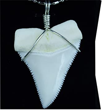 Amazon gemshark real shark tooth necklace 22 inch upper gemshark real shark tooth necklace 22 inch upper great white huge megalodon sterling silver aloadofball Gallery