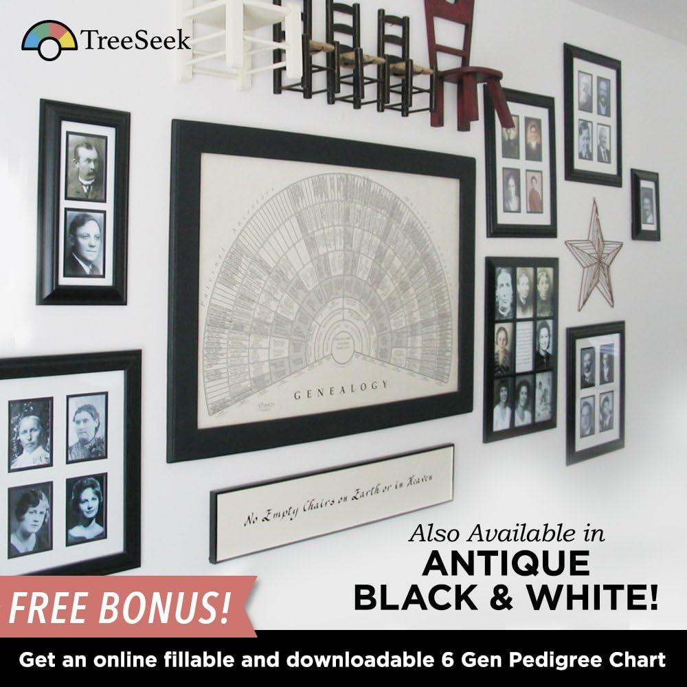 TreeSeek Family Tree Wall Poster Fan ChartLarge Colored Blank Fillable...