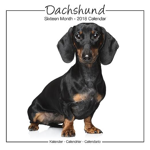 Dachshund Calendar - Dachshunds Calendars - Dachshund Wall Calendar - Weiner Dog Calendar - Dog Breed Calendars 2018 - Dog Calendar - Calendars 2017-2018 wall calendars - by Avonside Studio