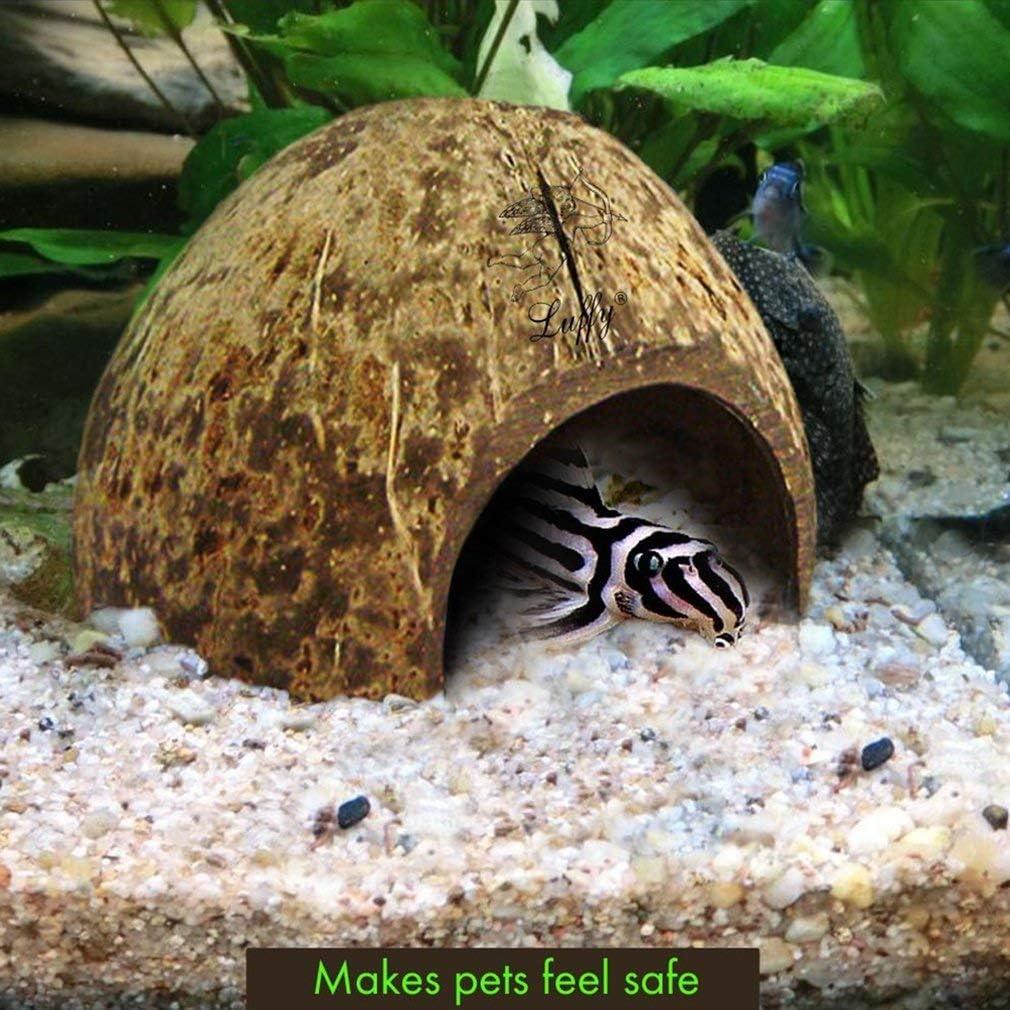 5x3 pollici realizzato con guscio di cocco selezionato 1 pezzo confortevole Coco Hut for Pets nascondiglio perfetto per i tuoi pesci compatto e spazioso perfetto per lallevamento