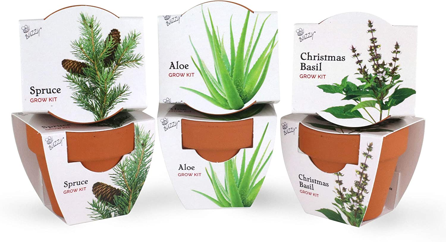BUZZY Terracotta Mini Grow Pots | Assorted 6-Pack | Radiant Collection | Aloe, Christmas Basil, Spruce | Best Gardening Gifts and Favors | Growth Guaranteed