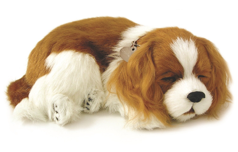 5Star-TD Cavalier King Charles Animated Pet