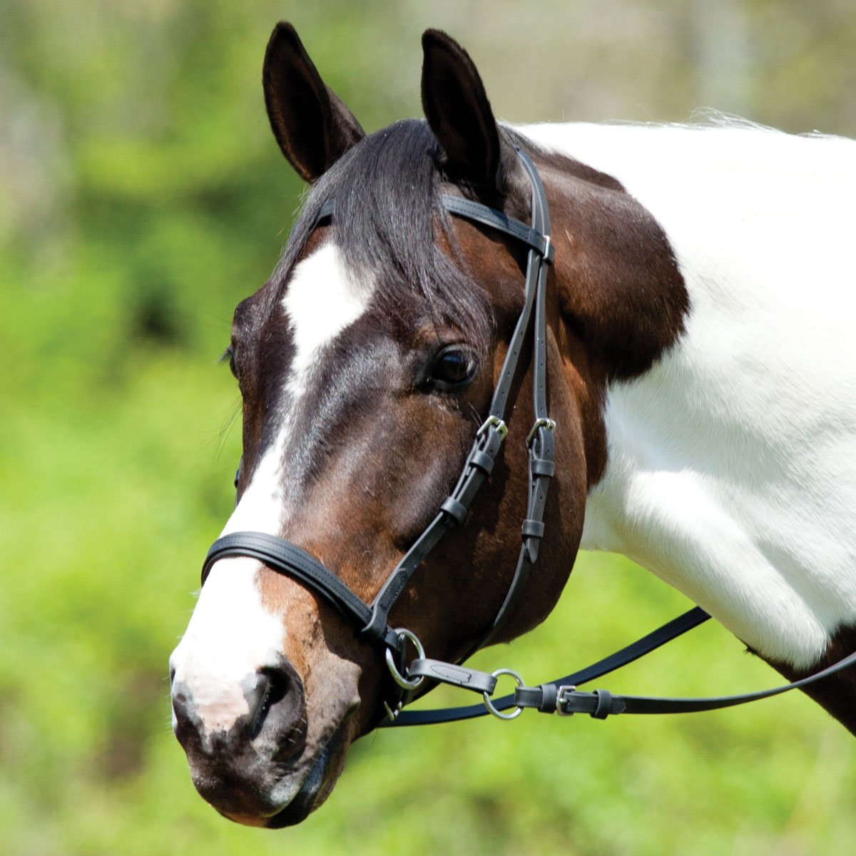 Image result for Bridle Research