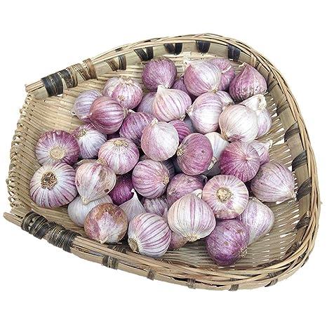 Noreste Daqing piel púrpura solo ajo cabeza ajo picante ajo picante ajo fresco (500g)