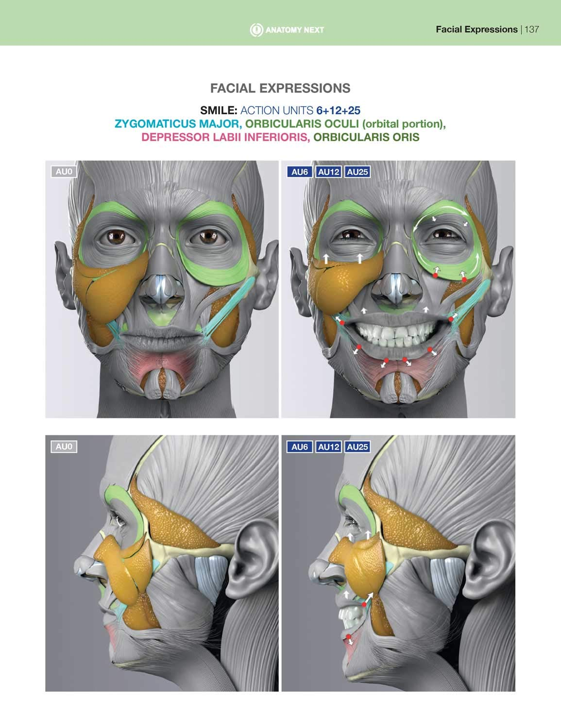 anatomy of facial expression pdf free download