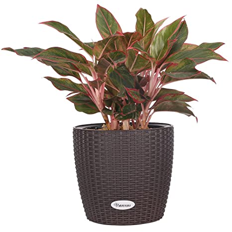 Self  Watering Planter Modern Decorative Flower Planter Resin Garden Planter  Pot(Brown)