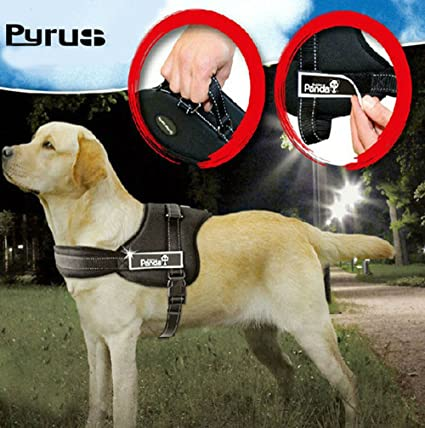 71s7Vdzg72L._SX425_ amazon com pyrus dog harness, k8 no pull harness dog leash padded