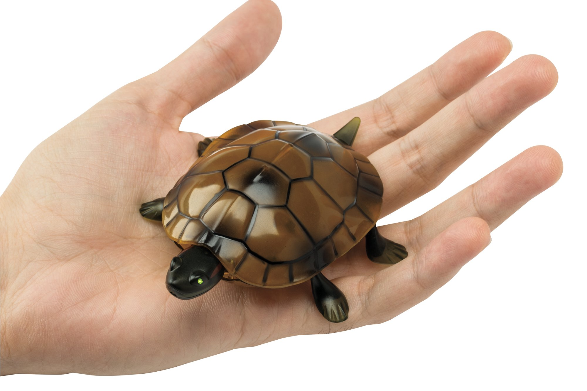 The Paragon Remote Control Turtle - RC Animal Toy, Turtle Toy for Kids and Adults by The Paragon (Image #6)
